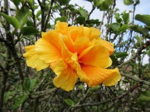 Všemožné barvy a tvary květin nás provázely celou dobu našeho pobytu na ostrově.