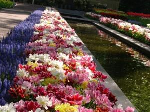 Květiny a zase jen květiny